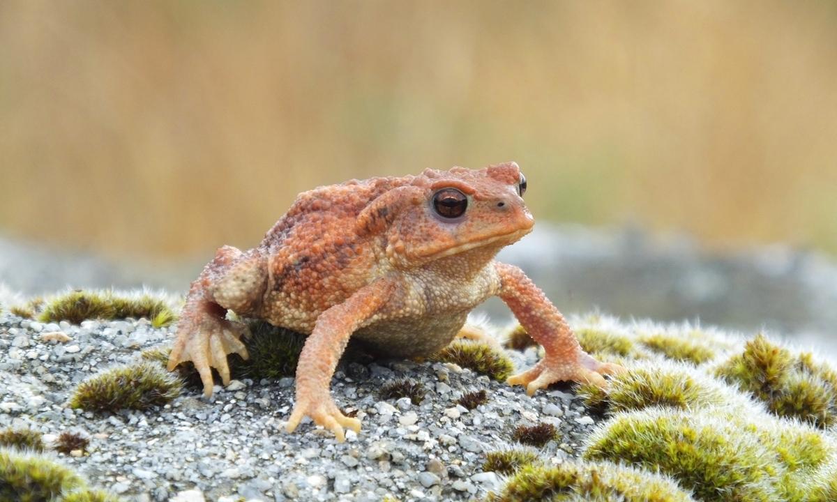 Sapo - características, fotos, espécies, ecologia - InfoEscola